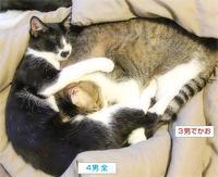 テトリスな猫たち - ちいさなチカラ