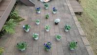 冬のハンギングバスケット第3弾 - ウィズ(ゼロ)コロナのうちの庭の備忘録~Green's Garden~