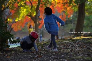 秋を楽しむ一日 - あおいくまの子守歌