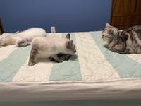 猫のオシッコ - 土筆の庭