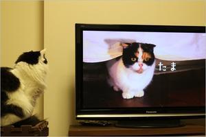 岩合光昭の世界ネコ歩き三浦半島 - ときどき☆タス