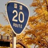 甲州街道のイチョウ並木を歩く - 黄色い電車に乗せて…