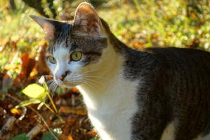 猫散歩 - 日向の国の備長炭 奥井製炭所