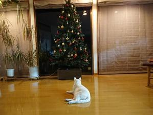 クリスマスまで1か月 - FRIED BAND