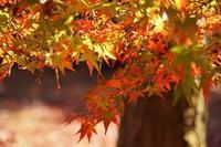 晩秋の京都~京都御苑 - kisaragi