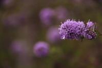 「花よ」 - 光と彩に、あいに。