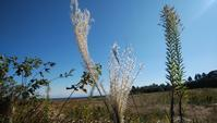 晩秋の草原 - 日々是窯ぐれ