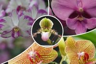 温室の花(豊平公園) - お茶にしませんか2
