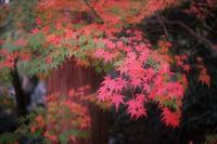 残っていた紅葉 - feel a season