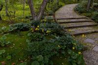秋の花咲く常寂光寺 - 花景色-K.W.C. PhotoBlog