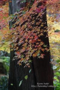 徳明園紅葉狩り#2 - 風の彩りー3