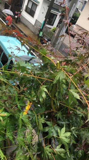 木の上からこんにちは。 - 目黒区 都立大の 花屋  moco    花と 植物で楽しい毎日     一人で全力で営業中