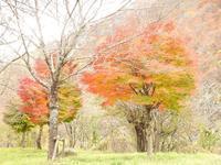 『庄川に架かる吊橋(七間飛吊橋)を歩いて・・・・・』 - 自然風の自然風だより