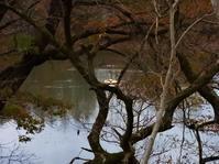 11月26日(木)ヒラタケ - 庄原市上野公園(上野池)とその周辺の出来事