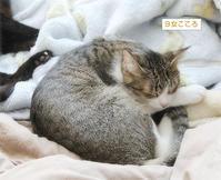 子猫のサイズ - ちいさなチカラ