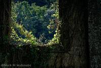 沈堕発電所跡-自然との同化 - Mark.M.Watanabeの熊本撮影紀行