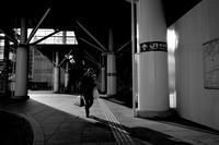 駅南広場は落葉してしまった。20201125 - Yoshi-A の写真の楽しみ