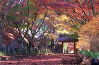 紅葉狩り~金蔵院へ - 季節の風を追いかけて