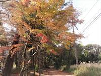 霧島神宮付近の紅葉 - だんご虫の花