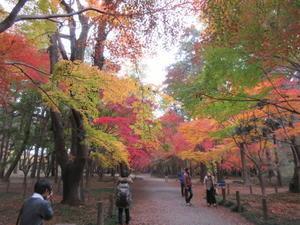 平林寺の紅葉 -