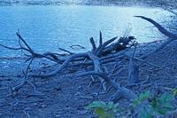 雄蛇ヶ池で出会った木の実・草の実 - イーハトーブ・ガーデン