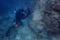 20.11.26午後からビーチダイブ。 - 沖縄本島 島んちゅガイドの『ダイビング日誌』