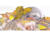 落ち葉とハリネズミ グリーティングカード【メール便可】 - ブルーベルの森-ブログ-英国のハンドメイド陶器と雑貨の通販