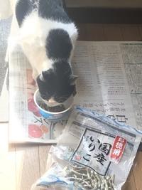 野良猫まるからの難題 - フィレンツェのガイド なぎさの便り
