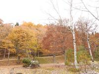『白樺と落葉松の聖域(荘川であいの森)』 - 自然風の自然風だより