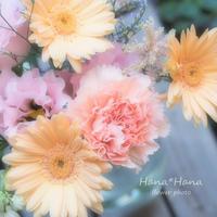 *切り花* - HANA*HANA