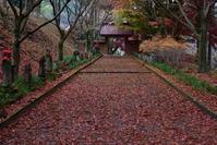 金蔵院の紅葉 - 季節の映ろひ