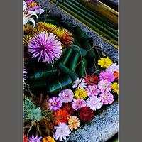 手水舎の花 - HIGEMASA's Moody Photo
