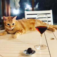 ようこそ、Bar ニャンズへ、、、!〜 ニャンズ日記 n.20 - 幸せなシチリアの食卓、時々にゃんこ
