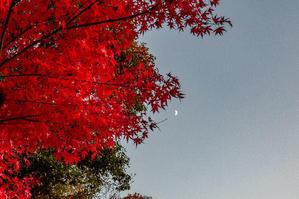 たつの東山公園もみじまつり -