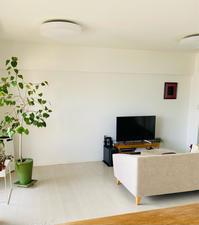 植物を窓際へ作戦 - ふたり暮らしの生活向上委員会