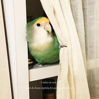 小鳥と暮らす Vol,4 - *Romantic caramel-香草菓子や粉と卵とおうちおやつ*