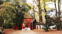 下鴨神社に行く11月(2020)-2 - 写楽彩2