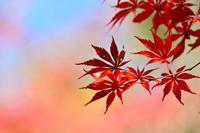 第59候北風木の葉を払う - Wind Tribe Story