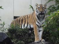 ミタケと月 - 動物園放浪記