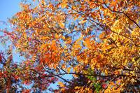 昭和記念の秋【2】 - 写真の記憶