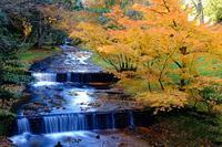小滝(赤坂山公園) - くろちゃんの写真