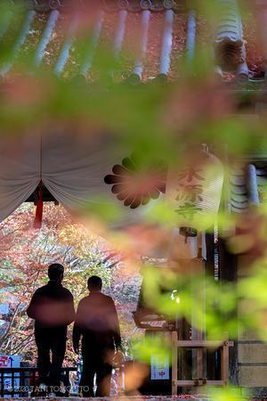 紅葉を楽しむ ~永源寺~ -