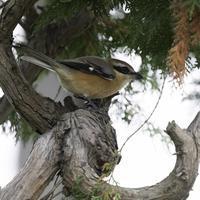 晴れのち曇り - TACOSの野鳥日記