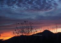 朝焼け、汚猫、山は雪 - 標高480mの窓からⅡ