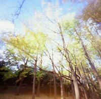 秋の公園 - Ippo Ippo