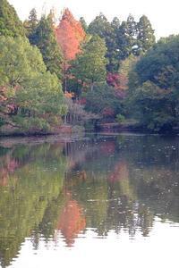 みゆき公園の紅葉 - きずなの家創り