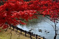 みちのく髙松公園 - みちのくの大自然