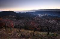 桜山公園 冬桜と紅葉 日の出 2 - photograph3