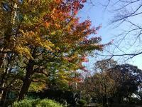 岡村、久良岐公園の紅葉 #1 - 神奈川徒歩々旅