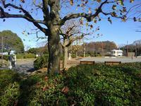 岡村、久良岐公園の紅葉 #2 - 神奈川徒歩々旅